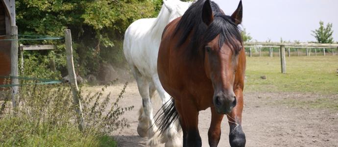 Horses690x300